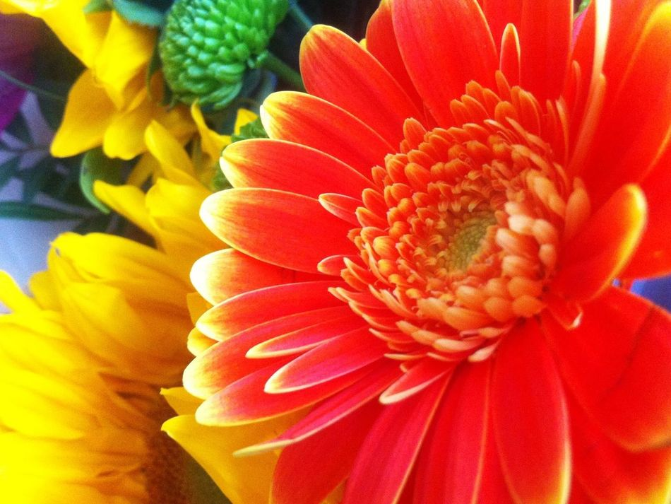 A gift received today. I feel very fortunate. Gerbera Bouquet Flowers
