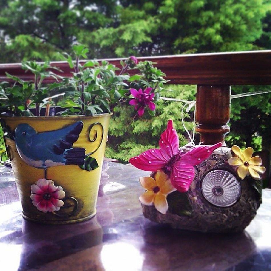 Baharbahcecafe Ciceklerim Aciyor Fusya mavikus kelebek