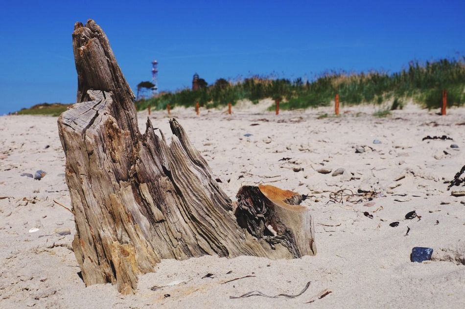 Wood on the beach No People Tree Sand Sky Nature Day Outdoors Beach Animal Themes Mammal Wood Wooden