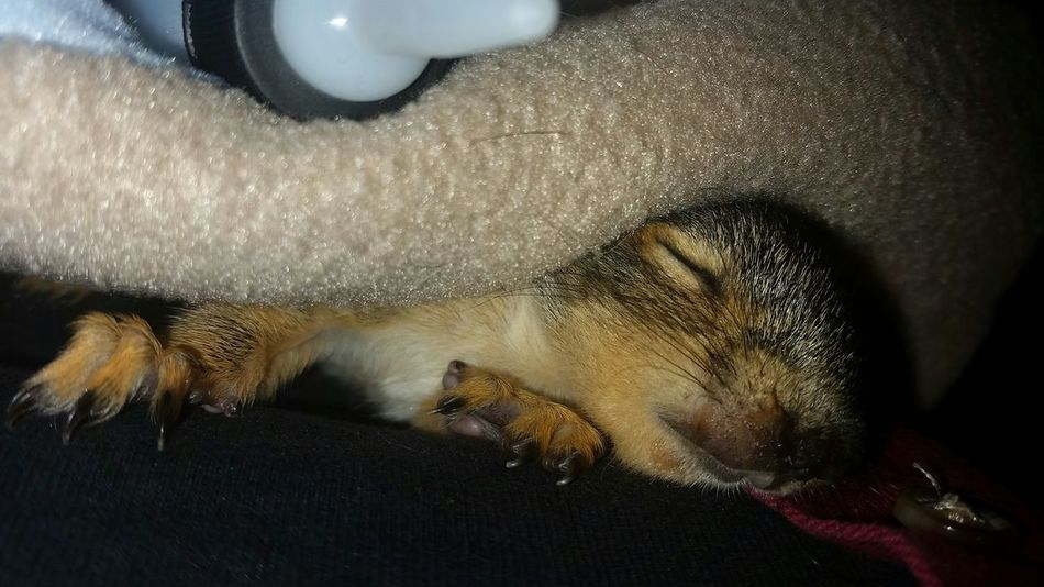 Cheese! Animal Love Love For Orphaned Animals Orphaned Squirrel Baby Squirrel