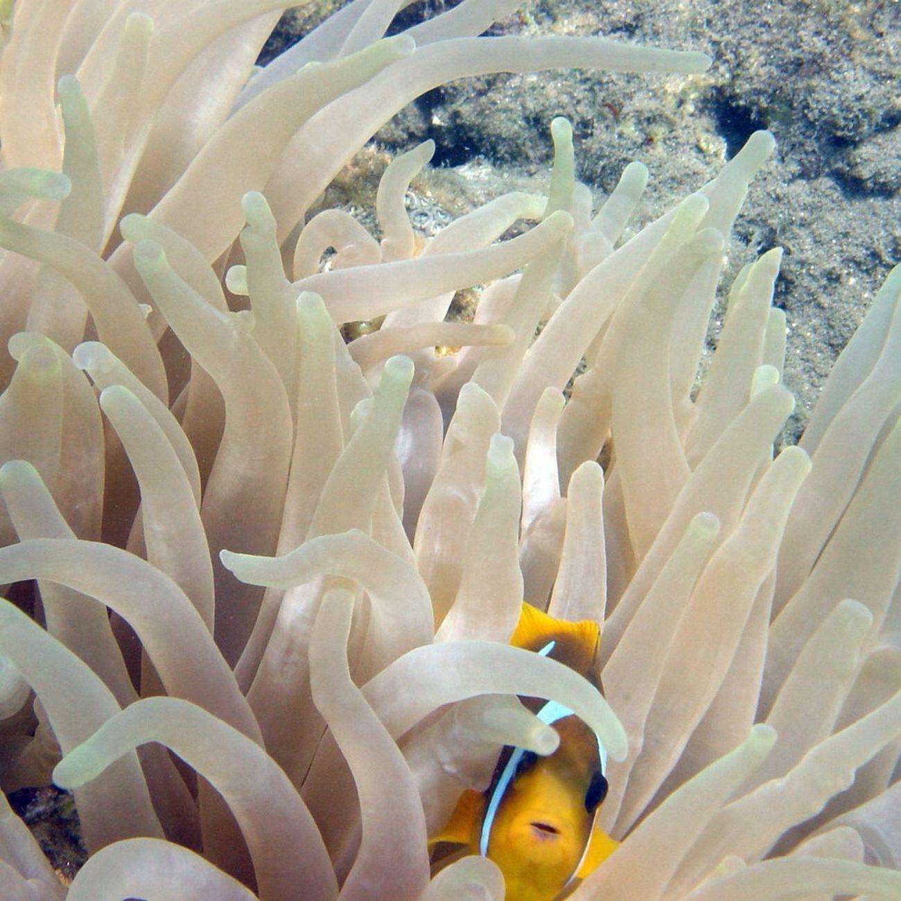Underwater Nemo Found Nemo