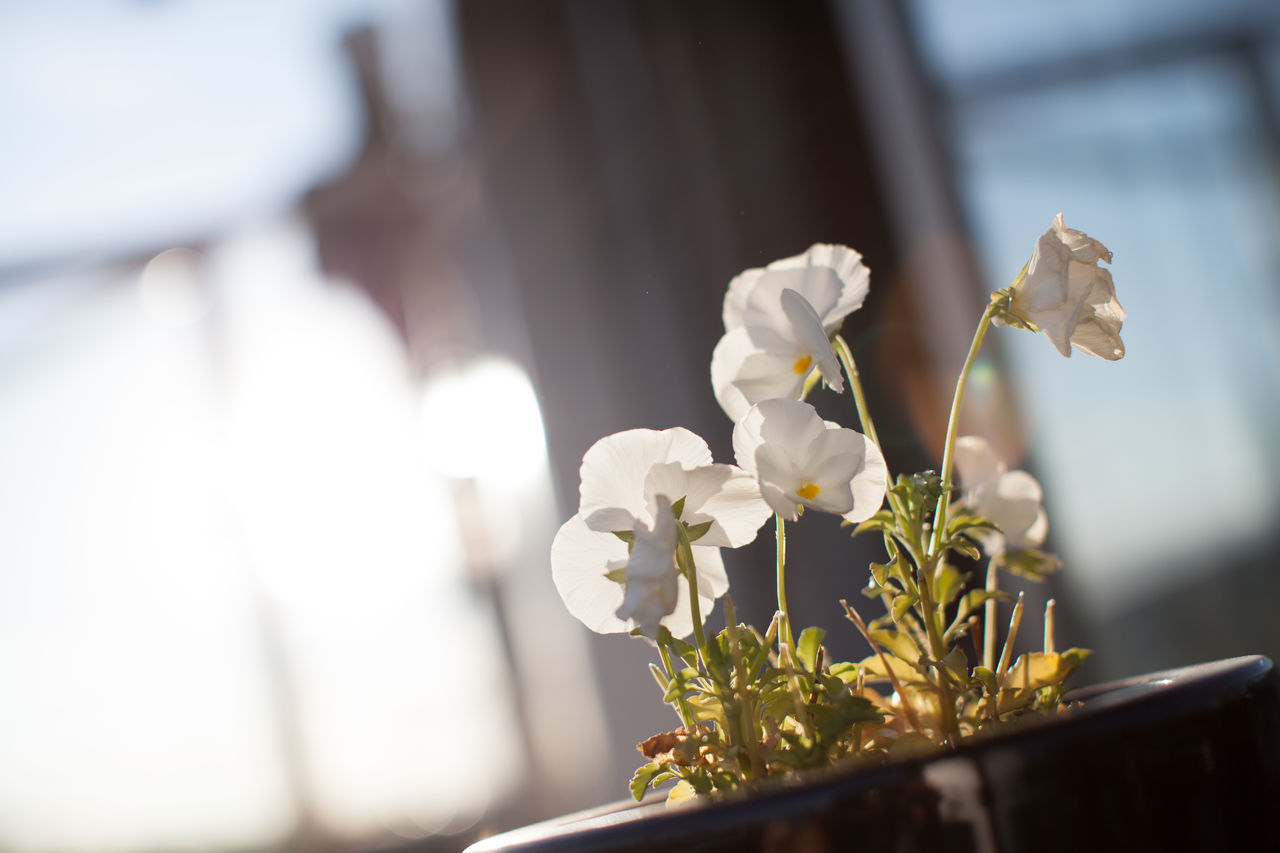 flower, nature, beauty in nature, freshness, focus on foreground, fragility, petal, day, plant, growth, close-up, no people, flower head, sunlight, outdoors, blooming, snowdrop