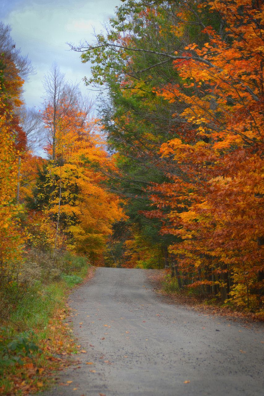 autumn, change, tree, leaf, nature, scenics, road, no people, beauty in nature, tranquility, landscape, forest, outdoors, day, sky
