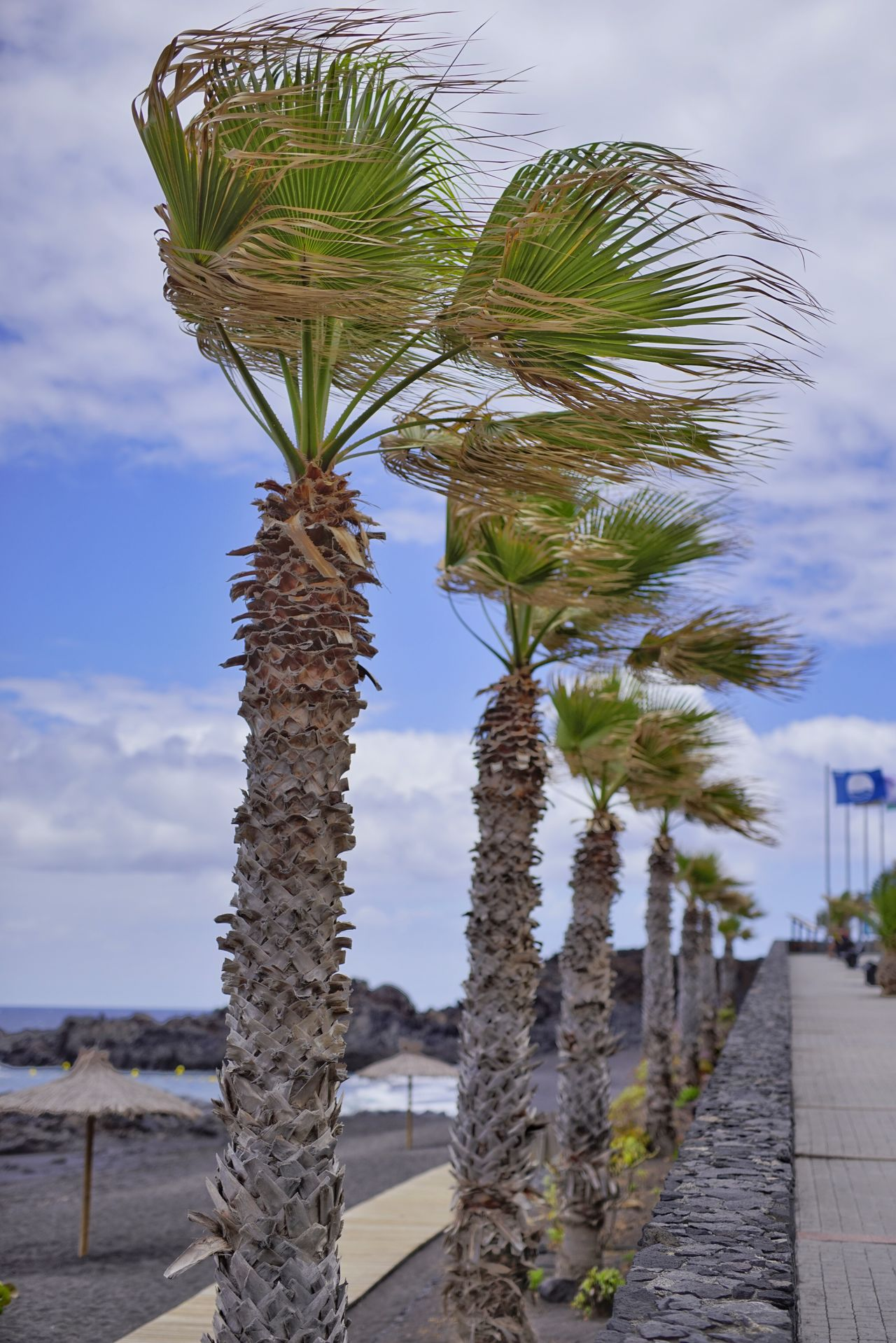 Palm Tree Tree Cloud - Sky Sky Outdoors Nature Beach Day No People Water Beauty In Nature Scenics Vacations Beauty In Nature La Palma Island Los Concajos Leisure Activity Beach Life Beach Photography Travel Destinations Green Color Plant