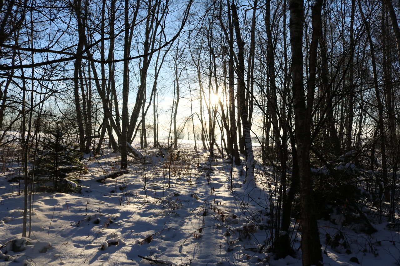 winter, snow, cold temperature, tree, nature, tranquility, weather, cold, tranquil scene, bare tree, beauty in nature, no people, outdoors, scenics, day, sunlight, landscape, branch, sky