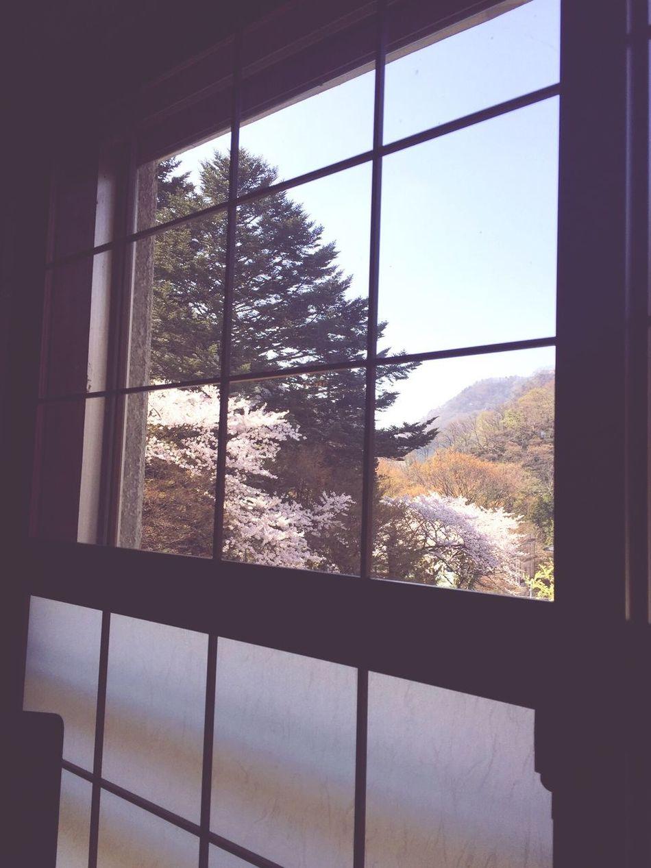 Window Sakura Indoors  Looking Through Window Window Frame Day
