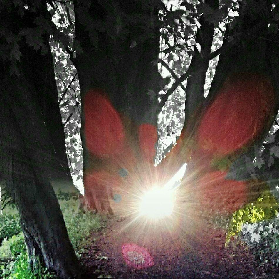 Bokeh Bokeheffect Bokeh Photography Sunset Sun_collection Sunny Day Sun