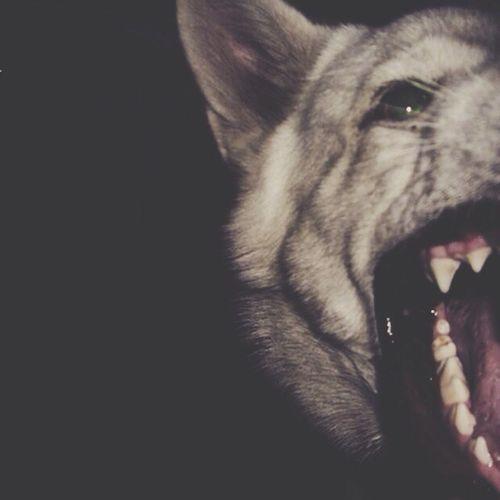 Dog Theeth