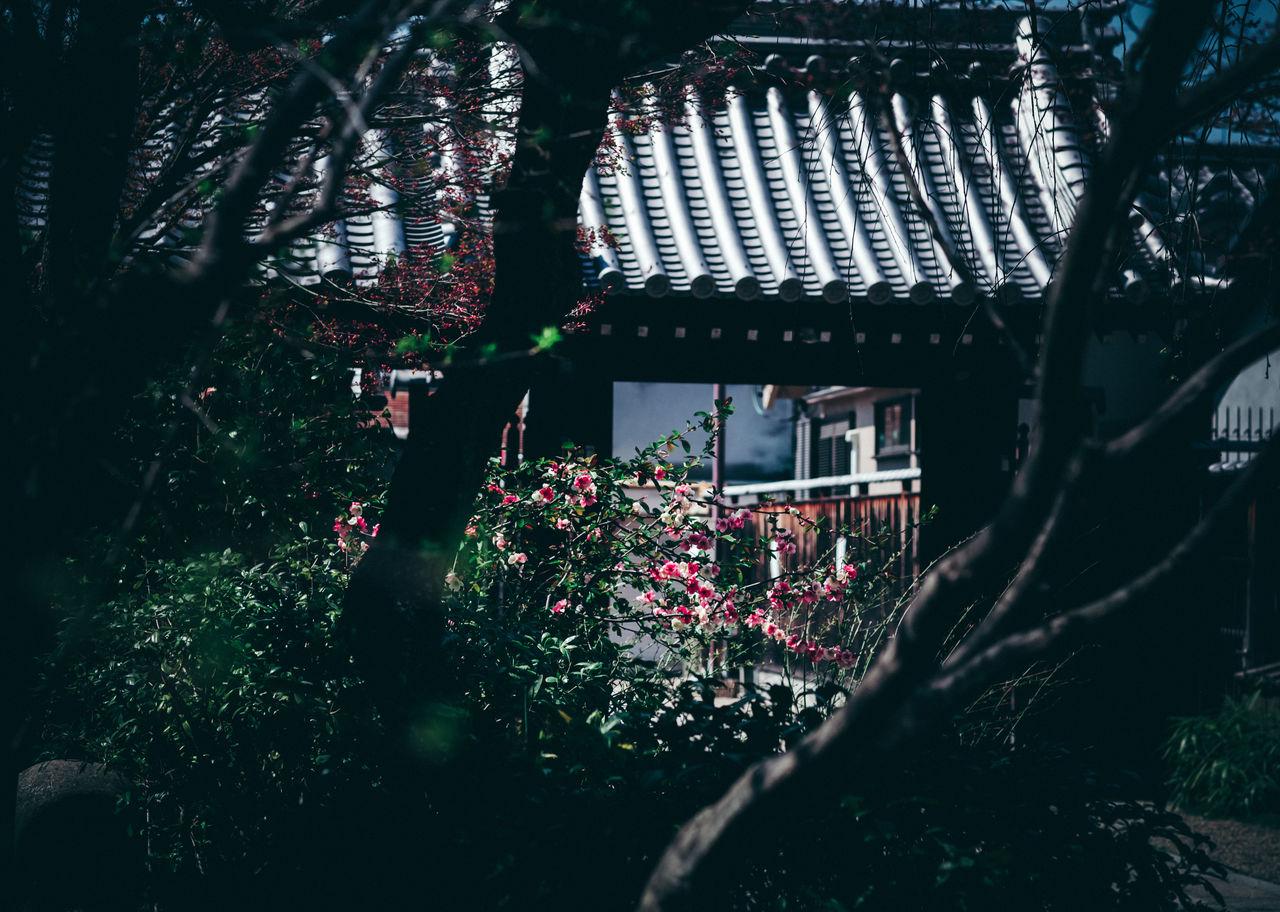 Blossom Day Details Exterior Design Gates Japan Japan Photography No People Outdoors Shinto Shrine Shrine Shrine Of Japan Spring Summer Temple