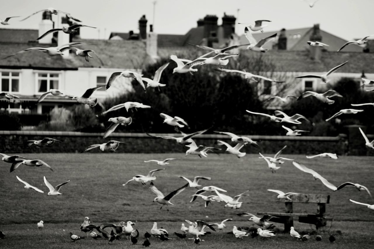 Crosby Beach Flying Bird Nature Flock Digital Photography Taking Photos Landscape Action Shot  Liverpool Seagulls Contrast