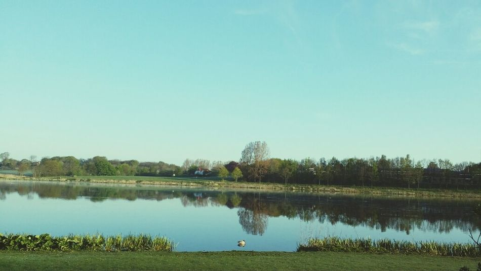 It's a beautiful and lazy morning at the lake. ?? Beautiful Day Lake View Relaxing Wildlife & Nature