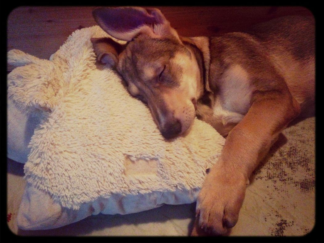 Dog A Small Dog Sleeping