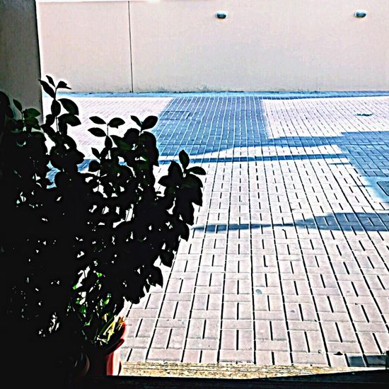 Light And Shadow Outdoors Plant Walking Around Relaxing Taking Photos Check This Out Light Shadow Aesthetics ♡