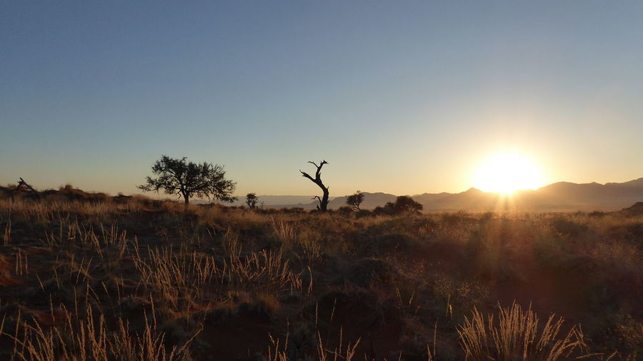 African Nature Beauty In Nature Clear Sky Landscape Namib Naukluft National Park Nature Sunrise Tranquil Scene