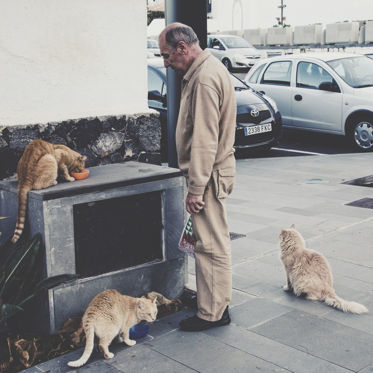 Showcase: January The Gang Beige Cats Tenerife Teneriffa Streetphotography Camouflage