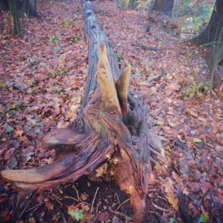 Forestbed Forest Tree Trunk Wood Walkingtrail Winter Fall Autumn Colours Texture Nature Netherlands Insta_netherlands