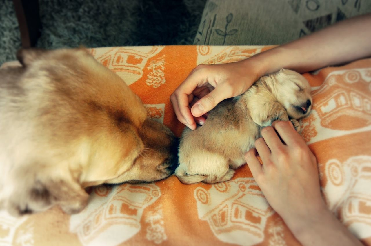 Close-up Cute Pets Dog Domestic Animals Holding Human Hand Indoors  Kind Hands Kindness Love ♥ One Animal One Person People Pet Owner Pets Puppy Puppy Love Rescued Rescuedog Safe Safety Stroking Tail Women Young Animal