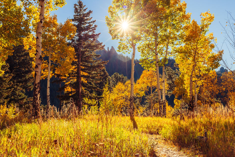 Aspen Trees Autumn Beauty In Nature Colorado Fall Beauty Fall Colors Golden Gate Canyon State Park Lens Flare Morning Light Nature Non-urban Scene Outdoors Scenics Season  September Sun Sunbeam Sunlight Sunny Tranquil Scene Tree