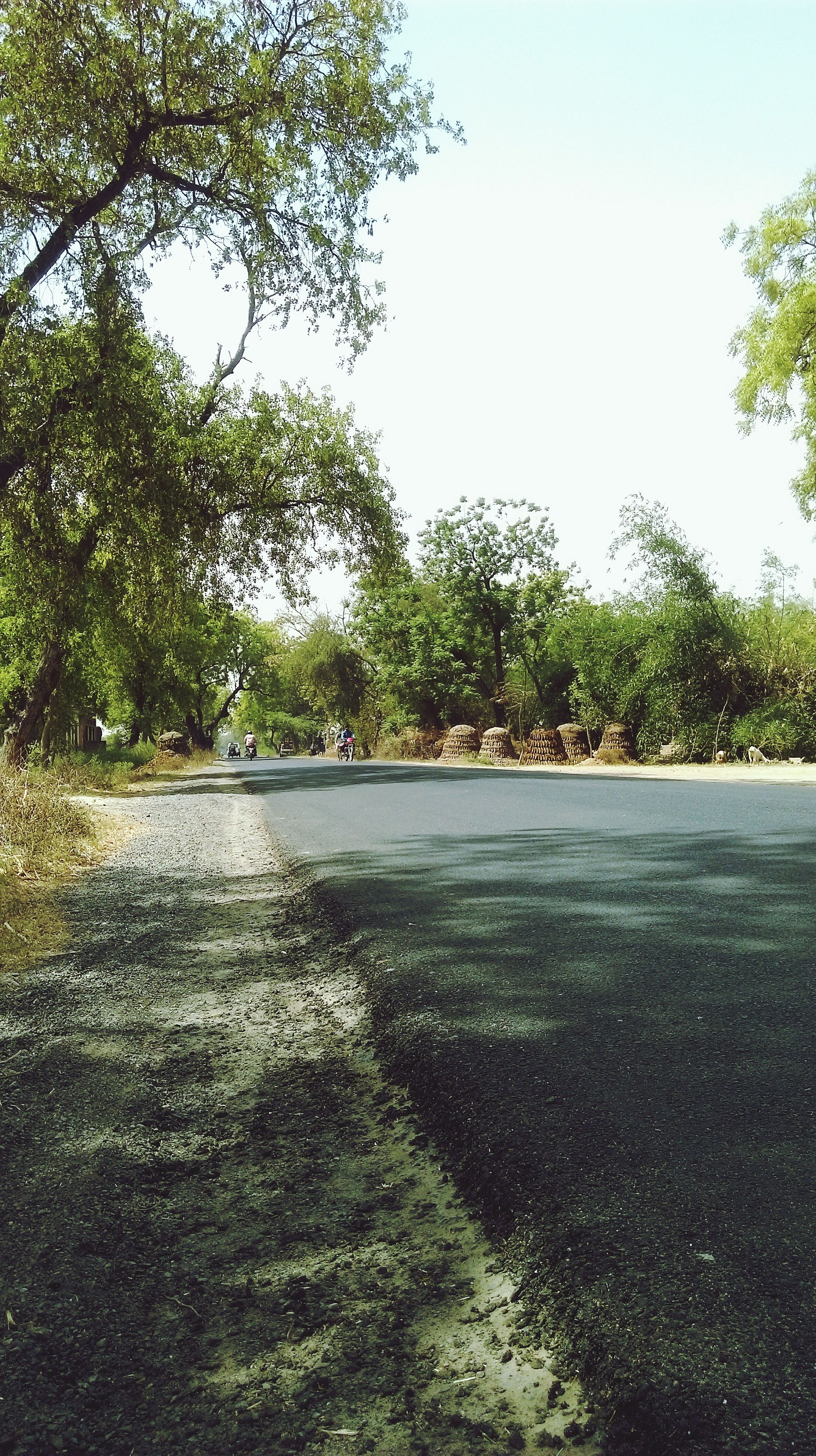 tree, the way forward, road, clear sky, diminishing perspective, tranquility, growth, footpath, vanishing point, transportation, shadow, nature, sunlight, tranquil scene, green color, empty, street, empty road, walkway, day