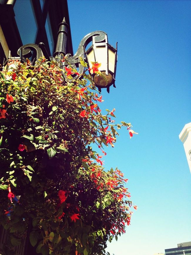 Shopping Taking Photos Sky Flowers