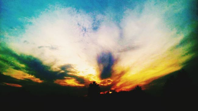 Silhouette Sunset Scenics Tranquil Scene Tranquility Beauty In Nature Sky Cloud - Sky Nature Majestic Dark Outdoors Growth Dramatic Sky Non-urban Scene Outline Atmospheric Mood Atmosphere Back Lit Cloudy