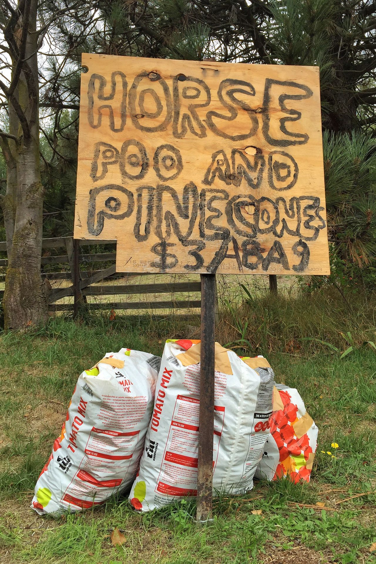 Horse Poop Pocket Money Chores Pinecones Cones