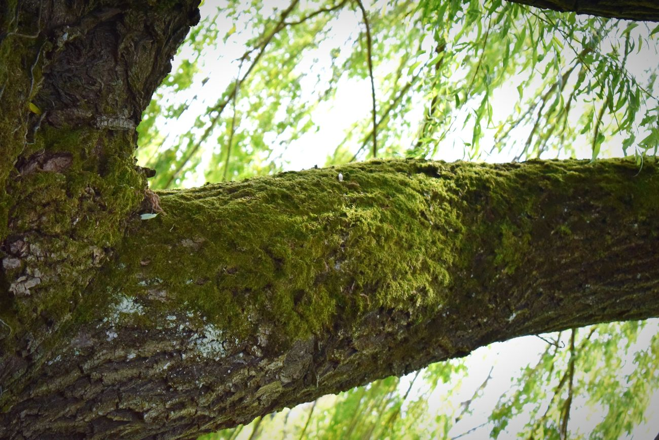 Tree Nature Green Color Outdoors Beauty In Nature Low Angle View DayNature No People Growth Close-up Sky EyeEmNewHere Nature Photography Nature Harmony Bourgoinjallieu France