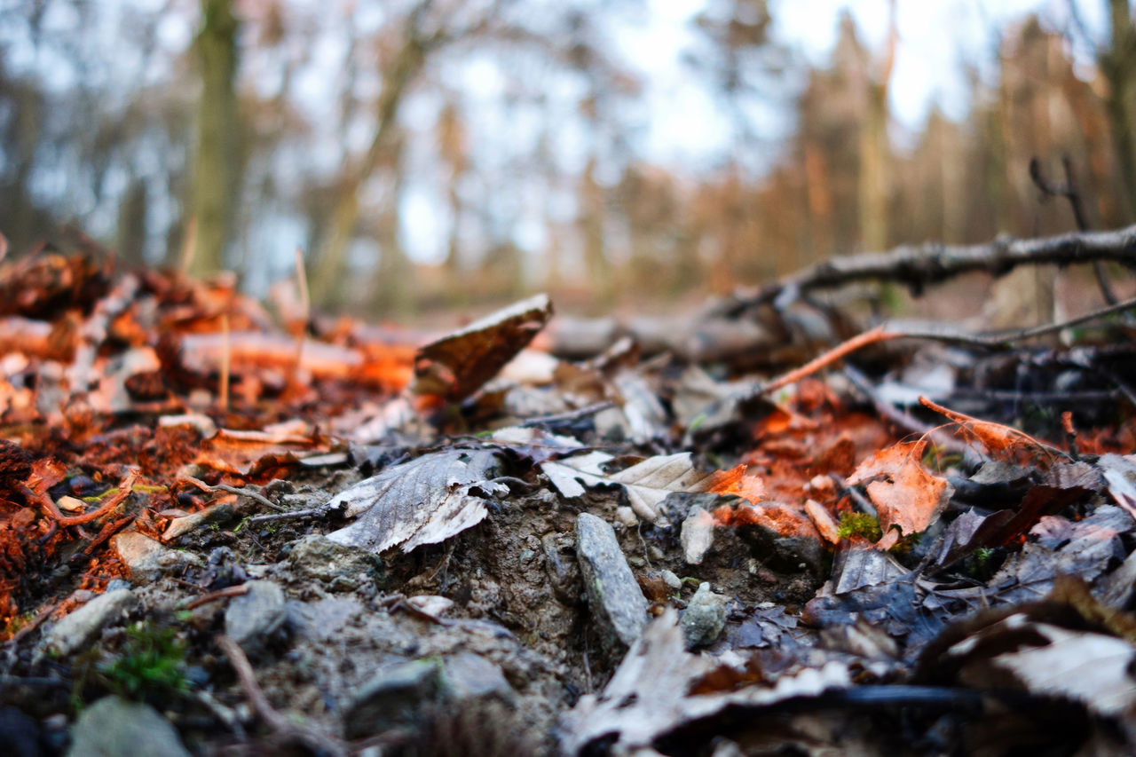 '16 Taunus Autumn Beauty In Nature Change Close-up Contrast Day Daylight Dry EyeEm Best Shots EyeEm Nature Lover Fallen Fallen Leaf Forest Fragility Leaf Leaves Low Angle View Maple Maple Leaf Nature No People Outdoors Perspectives Tranquility Tree