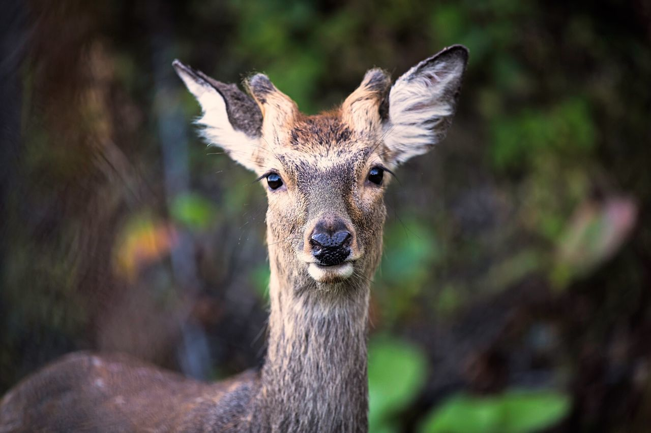 Beautiful stock photos of deer, Animal Themes, Animals In The Wild, Day, Environment