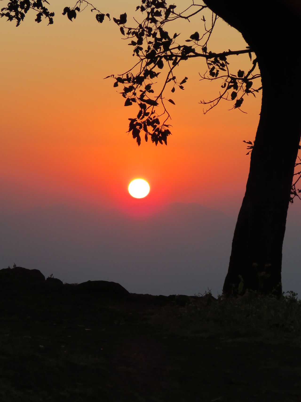 Sunrise Silhouette Sun Sunrise Sunlight And Shade Silhouette Nature Photography Natural Beauty Naturelovers Nature Colors Orange Sky And Sun Tree Silhouette EyeEmNewHere