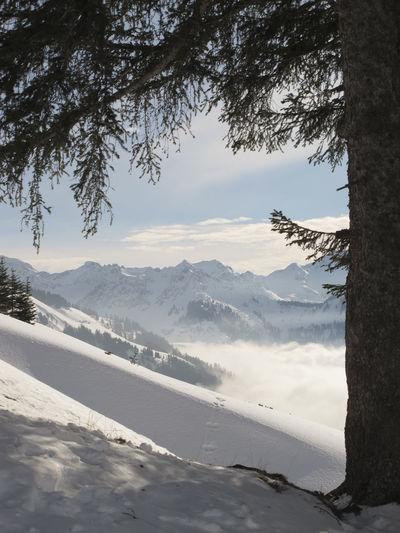 Austria Beauty In Nature Bregenzerwald Cold Temperature Damüls Day Landscape Mountain Mountain Range Outdoors Scenics Snow Tree Winter Österreich