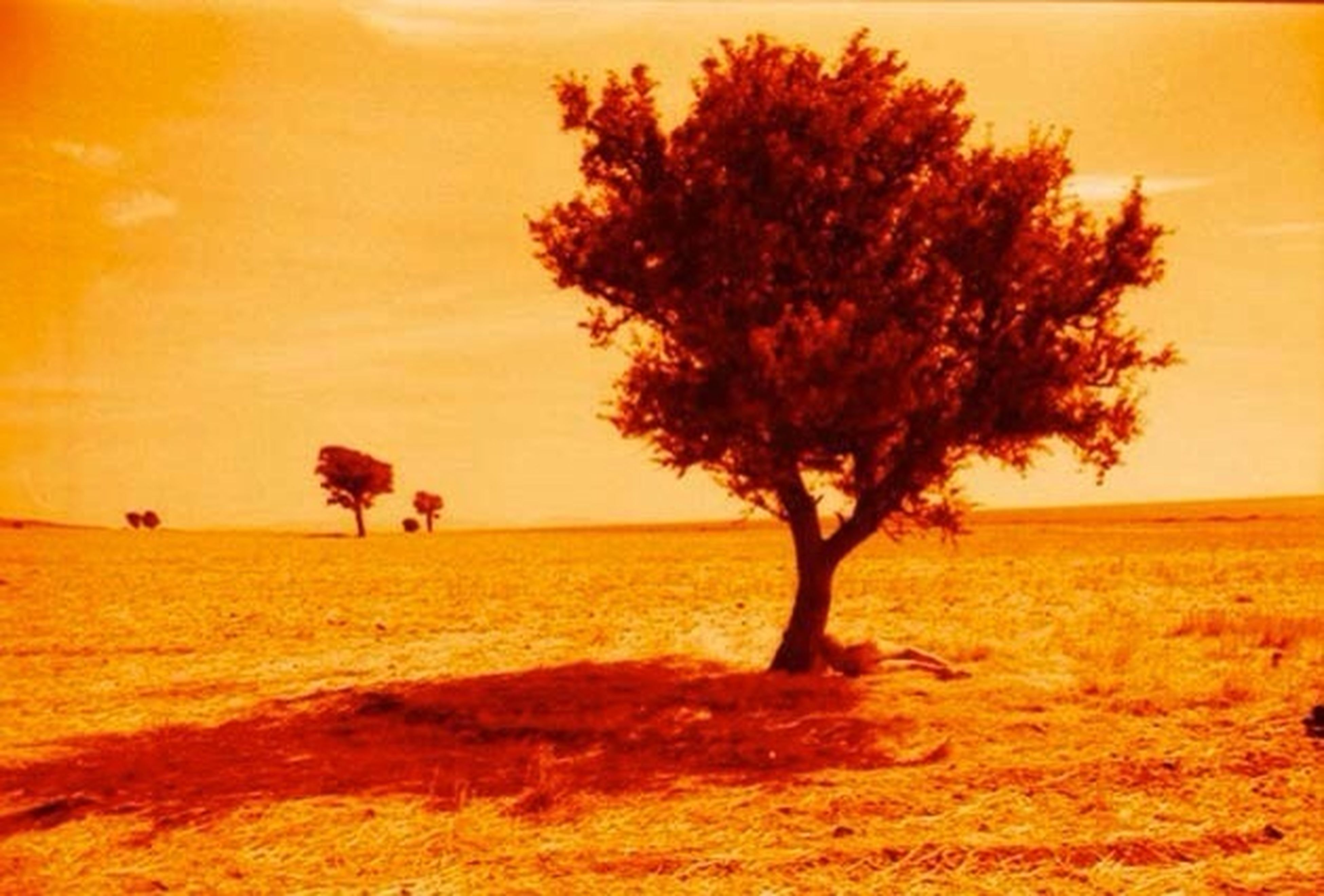 sunset, orange color, tranquil scene, tranquility, scenics, beauty in nature, sky, tree, landscape, nature, field, idyllic, sand, beach, growth, outdoors, horizon over water, no people, bare tree, remote