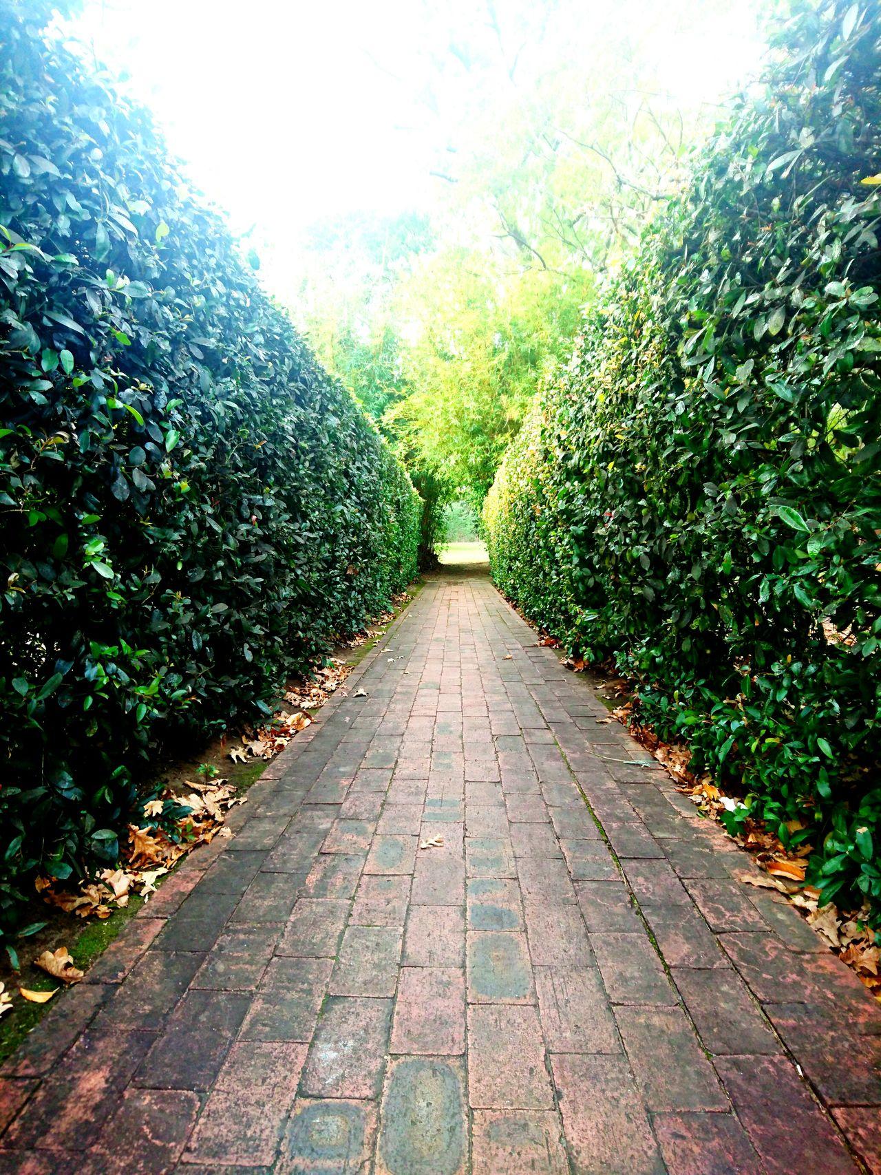 Hedgerow Hedges Hedge Row Beauty Hedgerow Tunnel Little World