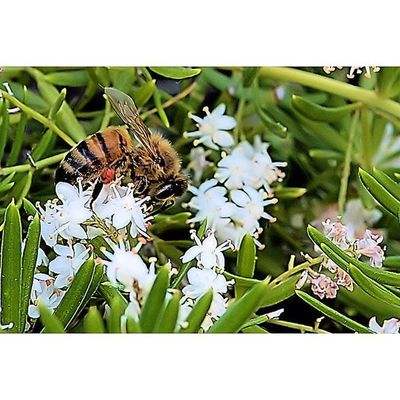 Bug Bugslife Fstoppers Insect Exposure Outdoor Capture Fotographia Fotofanatics_nature_ Macro Macroworld_tr Macro_freaks Macrophotography Bugs_are_us_ Fotofanatics_macro_ Macroclique Electric_macro Tgif_macro Pocket_family Tv_depthoffield Pocket_macro Macro_highlight Rsa_macro Electric_macro Show_us_macro tgif_macrohot_macrosmacro_clubopenthemefstopmagazineresourcemag