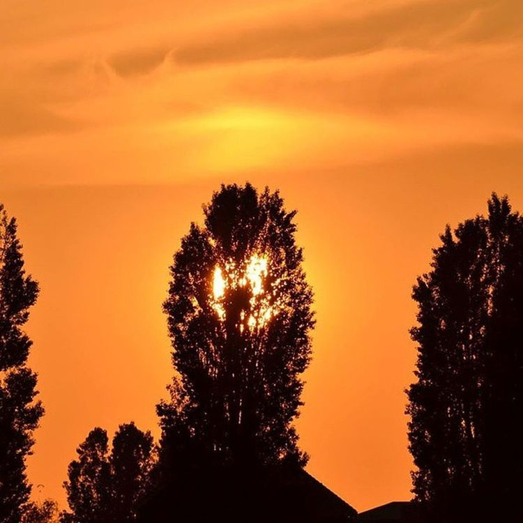 """Koningsdag"" Iedereen een fijne Koningsdag vandaag. Koningsdag Oranje Nederland Duiven kingsday orange holland"