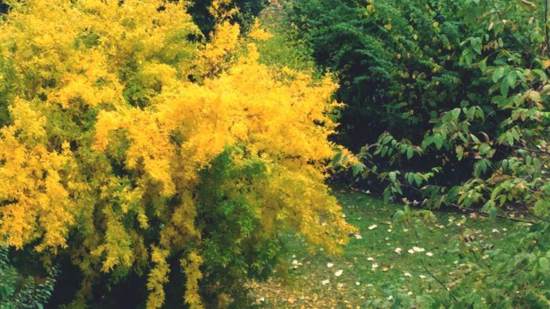 Autumn Colors Autunno  Coloriautunnali Foglieautunnali