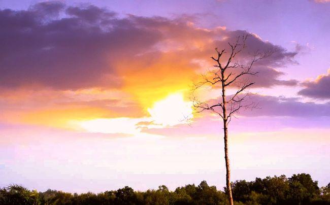 Nature Sunset Skylovers Yellow Autumn Landscape Tree Outdoors Worldphotographyday Tagsforlikes EyeEm Best Edits Eye4photography  Reflection No People Photography Hobbyphotography Hashtags My Favorite Place