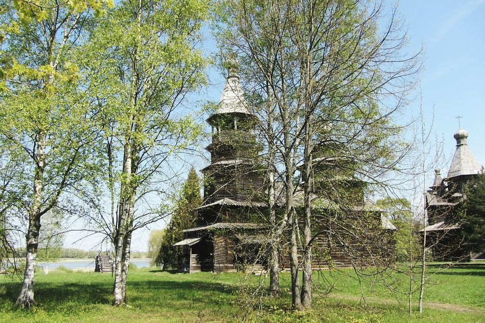 Growth Tree Green Color Nature Sky No People Sunlight Day Outdoors Grass Beauty In Nature Greenhouse Church Early Spring Russia Velikiy Novgorod Made Of Wood History Architecture