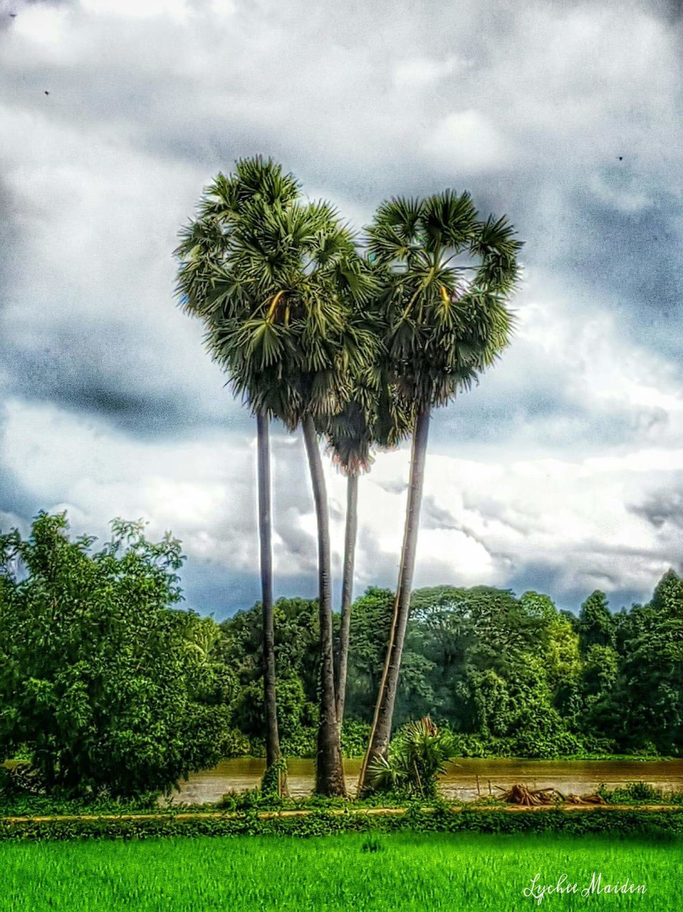 tree, cloud - sky, sky, growth, nature, cloud, palm tree, green color, beauty in nature, tranquility, scenics, tranquil scene, green, cloudscape, day, idyllic, no people, lush foliage, outdoors, low angle view, field, storm cloud, plant, landscape, grass
