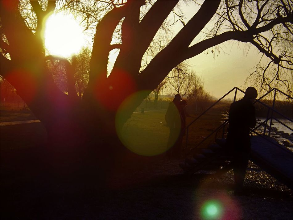 Best Of EyeEm Circle Lenses Circle Of Light Circles Circles In Circles Colorful Colorful Lights Dark Silhouette Diffraction Fault Fine Art Photography Loneliness Refraction Refractions In Light Sunlight Sunset Silhouettes Sunset_collection Tree Silhouette Warm Colors
