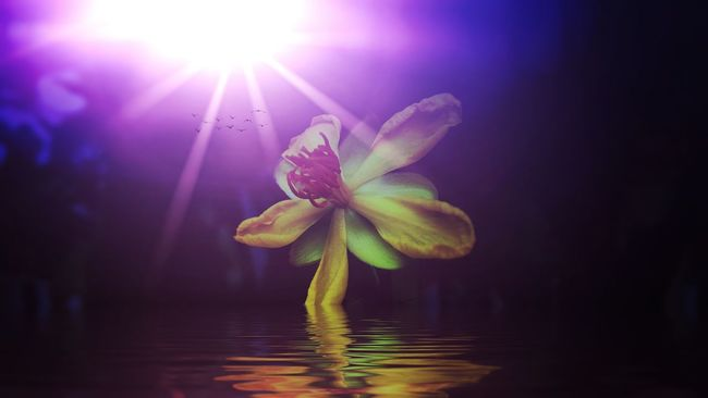 iphone Photo art Flower Freshness Fragility Petal Water Flower Head Beauty In Nature Sunbeam Sun Growth Nature Blossom Focus On Foreground Springtime Waterfront Day Pink Color In Bloom Botany Tranquility Photo Art Iphone Apps To Try