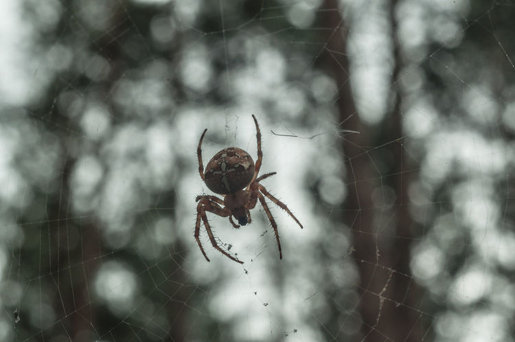 Animals In The Wild Close-up Dangerous Eight Legs Focus On Foreground Forest Macro Photography Nature Poisonous Spider Spider Spiderweb Terrible Wildlife