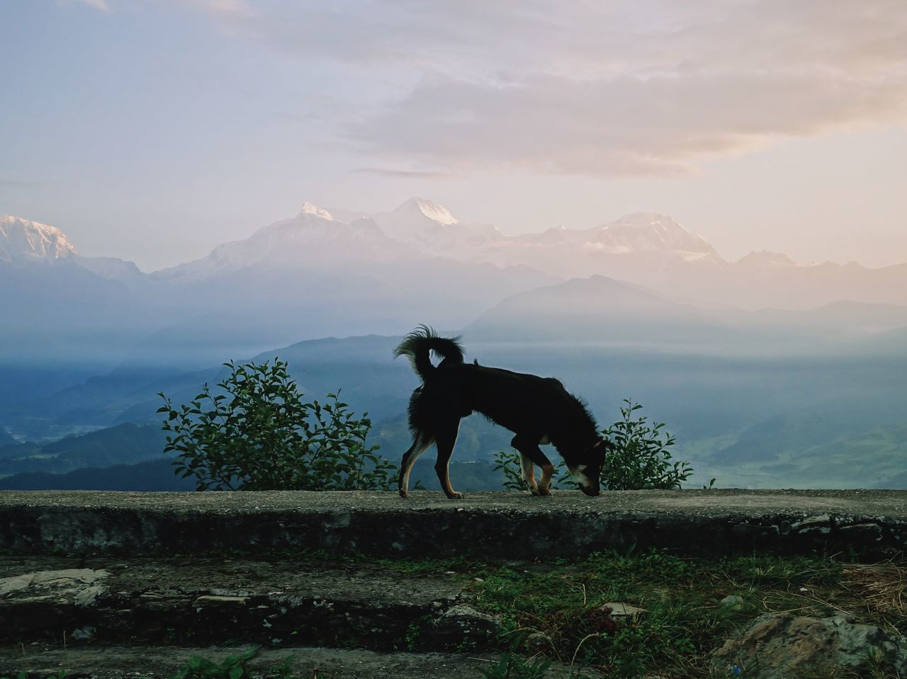 This dog would walk around at this viewpoint in the morning to watch the sunrise, it was amazing to witness. Adventure Annapurna Backpacker Clouds Clouds And Sky Dog Escapism Getting Away From It All Himalaya Himalayas Landscape Morning Mountain Mountain Range Nature Nepal No People Non-urban Scene Outdoors Photography Remote Travel VSCO Vscocam Wanderlust