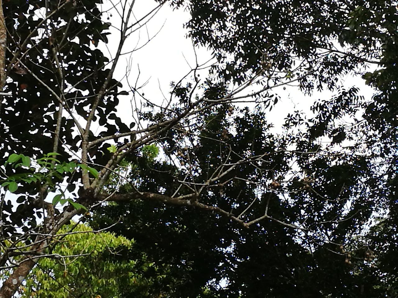 Canopy Nature