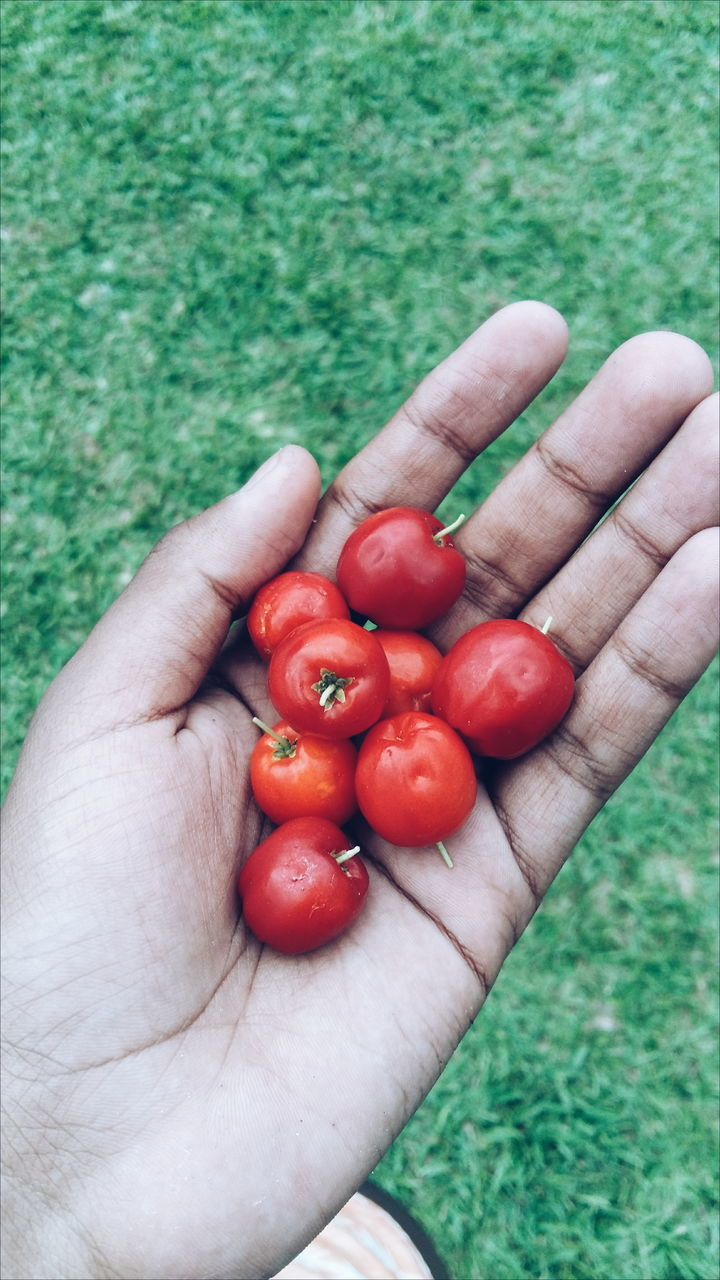 human hand, human body part, one person, human finger, holding, real people, red, food and drink, unrecognizable person, food, personal perspective, healthy eating, lifestyles, outdoors, leisure activity, green color, high angle view, fruit, close-up, grass, day, freshness, men, palm, one man only, people