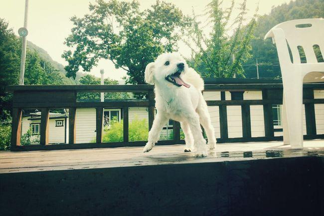 Relaxing 아롱 Travel Puppy
