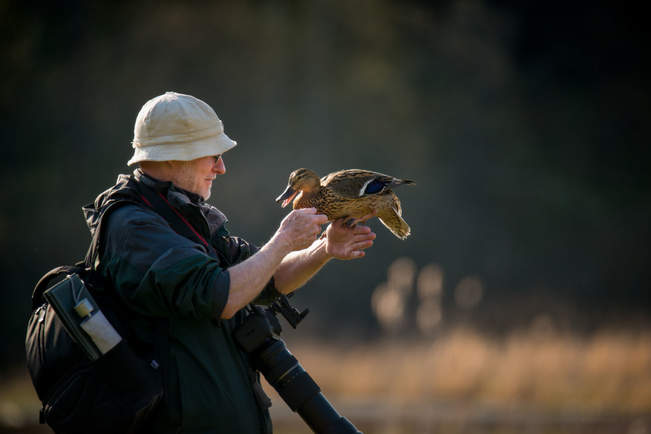 Man with a female mallard Animal Themes Animal Wildlife Animals In The Wild Bird Day Female Mallard Duck Focus On Foreground Holding Mallard Duck Nature One Animal One Person Outdoors Real People Side View Sitting On A Human Hand Togetherness Trust Between Human And Animal