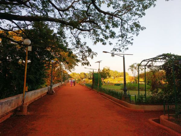 Tree Hanging Out Trees Park Parks And Recreation Garden Path Garden Photography Gardens Sky And Clouds Hello World Check This Out Track & Field Runningtrack Relaxing Green Leaves Soil Showcase: February Enjoying Life Garden Flowers People
