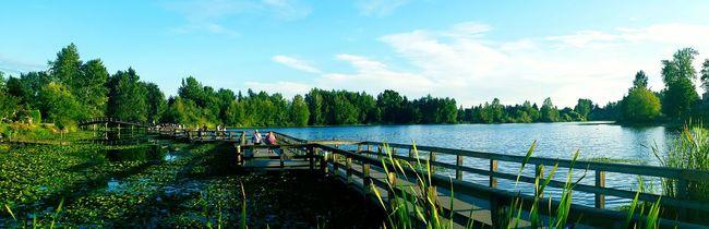Nature Mill Lake Park Summer Lake Panoramic Landscape