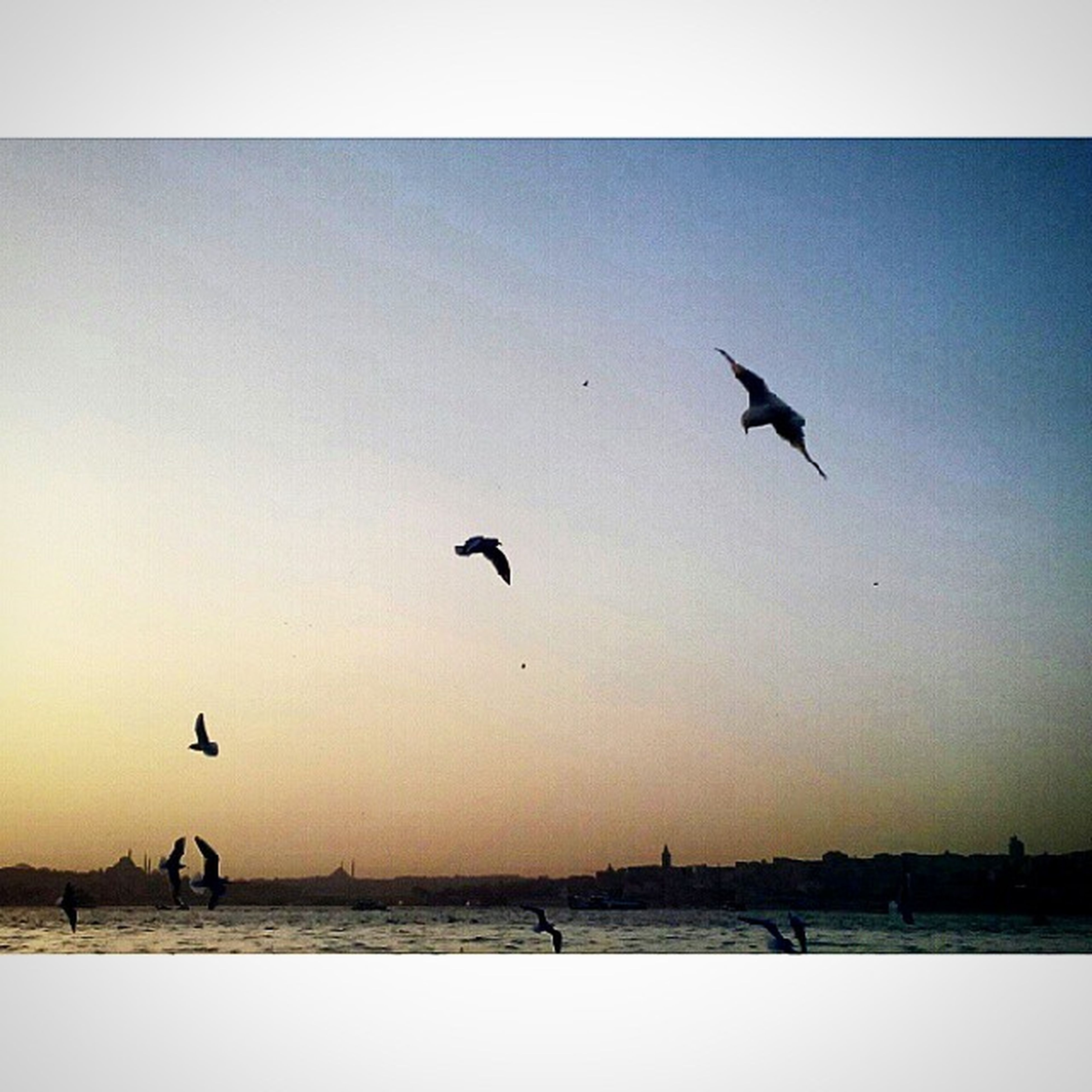 bird, animal themes, flying, animals in the wild, wildlife, transfer print, spread wings, silhouette, auto post production filter, sunset, seagull, water, mid-air, flock of birds, sky, nature, clear sky, sea, outdoors